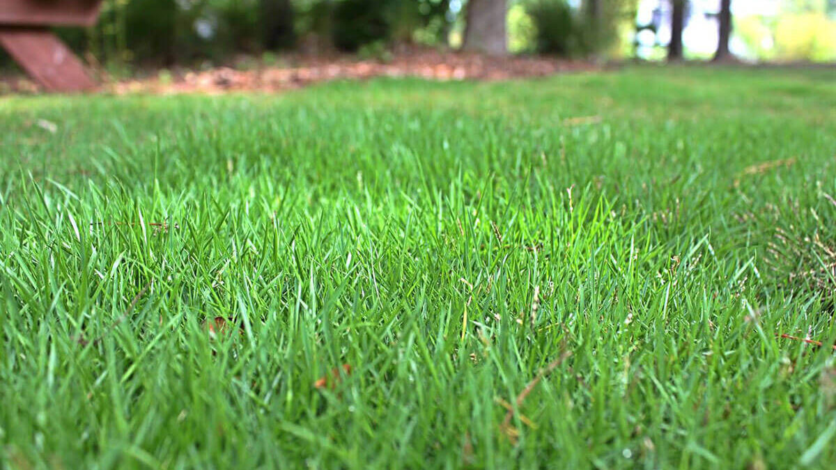 4 Types Of Grass For Louisiana And Their Proper Care